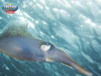 Slika naslovnice sjedišta: Triton professional - Vrhunski ribolovni alati (http://peskafondi.com)