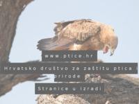 Slika naslovnice sjedišta: Hrvatsko društvo za zaštitu ptica i prirode (http://ptice.hr)