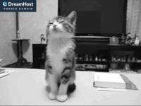 Slika naslovnice sjedišta: Staklarstvo Savica (http://www.savica-staklarstvo.hr)